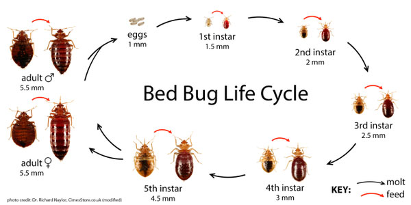Bed Bug Faq And Guidelines Ppld Org